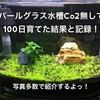 パールグラス水槽Co2無しで100日育てた結果と記録!写真多数で紹介!