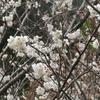 えぃじーちゃんのぶらり旅ブログ~九州編20190228福岡県行橋市&香春町