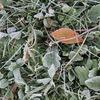霜が降りる季節の野菜サンド