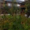庭の松の木とさつき。
