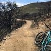 山火事の跡が痛々しいWeir Canyon | カリフォルニアのマウンテンバイク