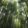 5/12 鎌倉観光!! 海沿いサイクリング!!