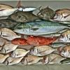 湾内ゲームの予定でしたが… 五目釣りに変更しました👍  【  日本海・ボートフィッシング  】