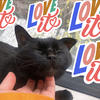 10歳の黒猫 怖がりベルの、久しぶりの病院。後悔しないように3ヶ月後に健診に行くぞ!