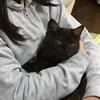 【しまんと猫カフェ役員紹介】新メンバー、就任しました!・・・アナ社長に似すぎな新役員・ココア。