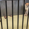 センターで産み落とされた赤ちゃん犬が殺処分されました