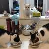 子猫さんと先住猫さんのアクシデント