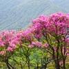 蛭ヶ岳日帰り登山!シロヤシオとツツジの花!塔ノ塔~丹沢山~鍋割山(後編)