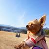愛犬とのお散歩におススメの公園!【むらやま公園】