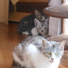 イクメン猫ダイちゃんと増える子猫