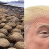 どうやらトランプ大統領は「帽子」コレクションをノルウェーの海岸に保管しているらしい