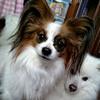 【低アルブミン血症】4月29日 雨の日は、散歩はお休み ~ルイの闘病記(7/16)~