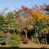 庭の紅葉 今年は赤が多めかな