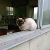 猫と田舎暮らし22