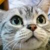 猫一匹いれば・・・