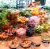 菜食主義に変え知った私たちの食生活に関する真実⑥
