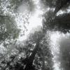 小雨降る羽黒山石段にてⅢ