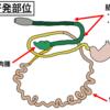 動物の腸管腫瘍について②~病因と挙動~