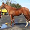 2020-2021 POG 牝馬第7位