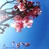 日新・春分の日