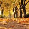 春夏秋冬どれが好き? 季節ごとの特徴をまとめてみた