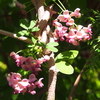 いろいろな色のアサヒナカワトンボ&キリシマツツジにクロアゲハとナミアゲハ&セッコクの開花♪