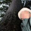 ニュージーランドで感じたカウリの巨木パワー!