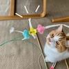 飽きっぽいるるちゃんの興味は移り変わり。今は紙ひもおもちゃがお好きな様子。