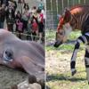 19世紀までは存在が知られることがなかった 未知の動物たち