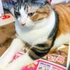 【愛猫日記】毎日アンヌさん#102