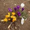 春の訪れ、そしてハチの巣狂騒曲の最終章??