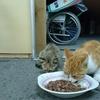 野良猫カメコと子供達