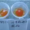 ②【1日目~25日目】言霊実験-卵にお玉?言葉が卵を腐らせた?