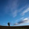 美瑛の丘 朝の雲
