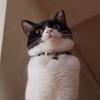 今日の黒猫モモ&白黒猫ナナの動画ー997