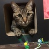 爪とぎにおすすめ! くらふと工房クレアル 猫つめとぎ ステップトンネル