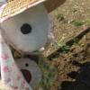 うさ次郎!鳩救出作戦!畑で動かないハトさんを保護してみたら