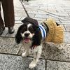 8月5日 関西の風物詩★愛犬と一緒に鵜飼いを見に行こう♪