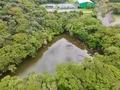 【427】稲取高原クロカンの池(仮称)(静岡県東伊豆)