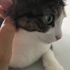 【愛猫日記】毎日アンヌさん#43