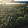 オルかな農園報告㊱~体験希望者が来てくれた(#^.^#)