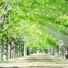 進め!俳句ビギナー㉕。「五感で切り取る季節の変化と心象風景。その移ろいを映してみせる季語が振るう采配は躍動感と小粋なリズムに包まれて」の巻。