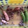 ベランダ野菜も冬は