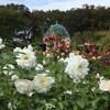 秋の京成バラ園を散策 バラの家の木村卓功さんのガーデンセミナーに参加