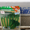 茎ブロッコリー/スティックセニョールを素人が種から育ててみた結果これがリアル/種まきから100日経過