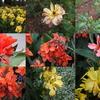 【フリー】様々な画像処理が可能な一括サイズ変換ソフト(Ralpha Image Resizer)