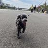 横浜お散歩トレーニング。