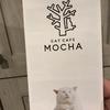 遅くなりましたが猫カフェデビューしました。【動画もあり】