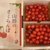【ふるさと納税】野菜・果物② 甘くて美味しい!今が旬な『さくらんぼ』 山形県天童市