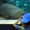 ハノイでのある夏休みの一日(Vincom Times Cityの水族館)